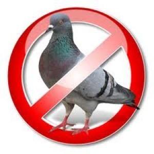 Soluzioni per allontanare i piccioni
