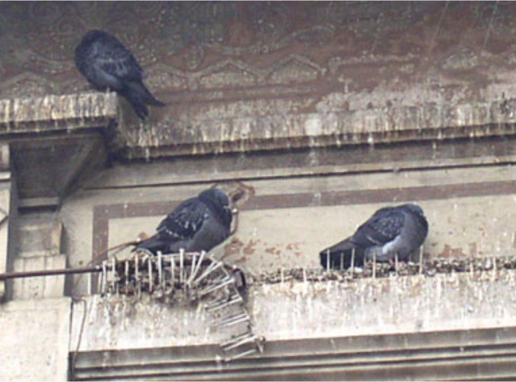 disinfestare piccioni nel fotovoltaico