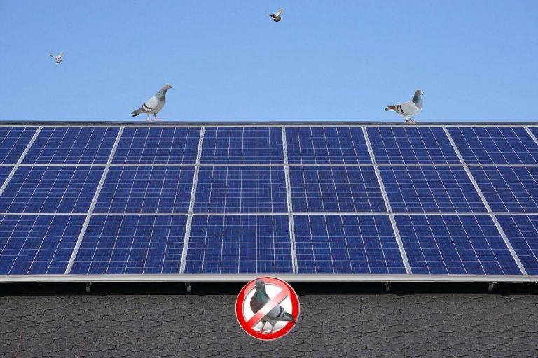 Scovolo dissuasore piccioni da fotovoltaici